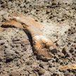 12-летний мальчик нашел скелет динозавра в Канаде