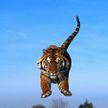 Мотоциклисты едва не стали обедом тигра