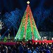 Мужчина залез на рождественскую ель у Белого дома