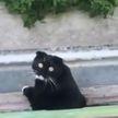 Реакция кота на очень плохое пение соседки рассмешила Сети