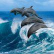 ВИДЕОФАКТ: огромное скопление дельфинов заметили у американского пляжа