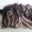 Волонтёры побрили странное существо и были шокированы результатом (Фото)