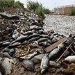 В Ираке по загадочной причине массово гибнет рыба