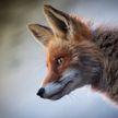 Поправки в закон «О животном мире» намерены внести в Беларуси