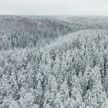 Мужчина заблудился в лесу в Жлобинском районе: его пока не нашли