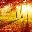До +20°С прогнозируют синоптики в Беларуси 21 октября