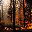 Запрет на посещение лесов распространился на все регионы Беларуси за исключением некоторых районов Гродненщины