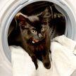 Женщина случайно постирала своего котенка в стиральной машине