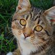Ошибки в содержании кошек, которые совершают многие хозяева
