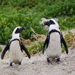 В Британии смотритель зоопарка продавал пингвинов и цапель через Facebook