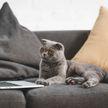 Кот работает на удаленке? Пушистый по совету хозяина разблокировал экран ноутбука и стал звездой соцсетей (ВИДЕО)