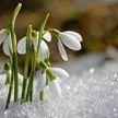 Ночные заморозки до -9℃ ожидаются в Беларуси 31 марта