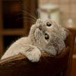 Кошка принесла хозяйке на кровать котенка. Интересно зачем? Посмотрите, милота зашкаливает! (ВИДЕО)