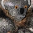 Пользователи Сети разглядели в подушечках собачьих лап маленьких коал