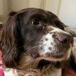 Рождественское чудо: в Бельгии пропавший пёс вернулся домой спустя 6 лет