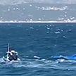Лодка с мигрантами затонула в Эгейском море. Есть погибшие