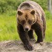 «Мне от видео страшно стало»: пилот уговорил медведя не нападать на туристов – женщина включила телефон на запись. Посмотрите, какие у них стальные нервы!