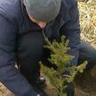 Вклад в озеленение и чистый воздух: во время «Недели леса» посажено 33 млн новых деревьев