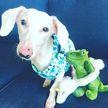 Слепая такса-альбинос стала звездой Instagram. Только посмотрите, какая милая!