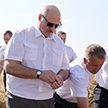 Лукашенко: Не надо дергать аграриев на выборы. Потерять урожай ради какой-то политики – полный идиотизм