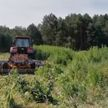Почти две тонны дикорастущей конопли уничтожили сотрудники наркоконтроля в Калинковичском районе