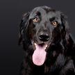 Омолаживающая маска? Только посмотрите, с каким удовольствием пес окунает голову в грязь! (ВИДЕО)