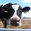 Просторные помещения и автоматизированный доильный зал «карусель»: в Каменецком районе открыли современную молочно-товарную ферму
