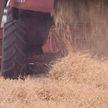 Техника на полях. Уборочной кампании в Гомельской области мешает погода