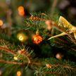 Почему новогоднюю елку нельзя долго держать в доме, рассказал эксперт