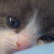 Котёнка впервые клонировали в Китае