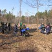 «Неделя леса»: представители стран СНГ поддержат республиканскую акцию в Беларуси
