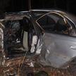 В Могилевском районе автомобиль сбил лося. Водитель в больнице