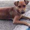 Беременная бездомная собака пришла за помощью в ветклинику