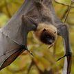 «Ночь летучих мышей» в Минске: учёные развеют мифы о загадочных ночных существах