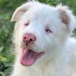 Это слишком мило! Хозяин показал, как будит свою глухую и слепую собаку (ВИДЕО)
