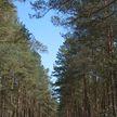 На юге страны вновь введены запреты на посещение лесов