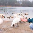 Аномально теплая зима: как влияет непривычная температура воздуха на людей и животных