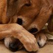 Понять и простить: 10 фото очень виноватых собак