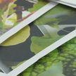 Более 200 аграрных классов готовят первый выпуск