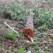 В Лиозненском районе во время валки леса погиб лесоруб