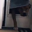 Собака разорвала книгу и резко передумала возвращаться домой