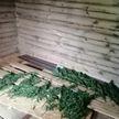 Группу наркосбытчиков задержали в Могилеве
