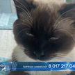 Кот ищет дом! Сотрудники автосервиса нашли в капоте машины породистого питомца – он будет рад обрести хозяев