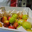 Экологичная одежда и аксессуары. Дизайнеры разработали сумку из яблочной кожуры