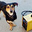 Cубботник для животных: волонтёры отремонтировали и утеплили вольеры в приюте для собак