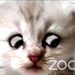 Адвокат из Техаса не справился с Zoom и предстал в суде в образе кота