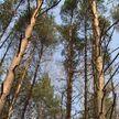 В Беларуси сняты запреты на посещение лесов