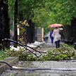 Мужчина чудом выжил во время урагана (Видео)