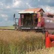 Белорусские аграрии планируют собрать рекордный за последние 10 лет урожай рапса