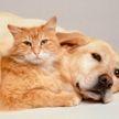 Хозяин застукал собаку в страстных объятиях кошки